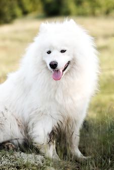 Feche o cão branco bonito na madeira