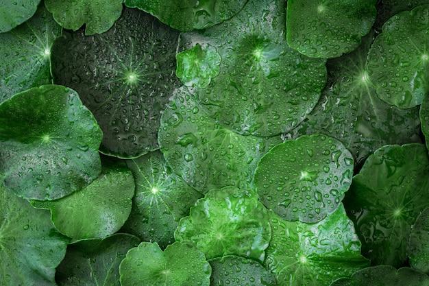 Feche o círculo decoração verde verde como fundo verde absractado