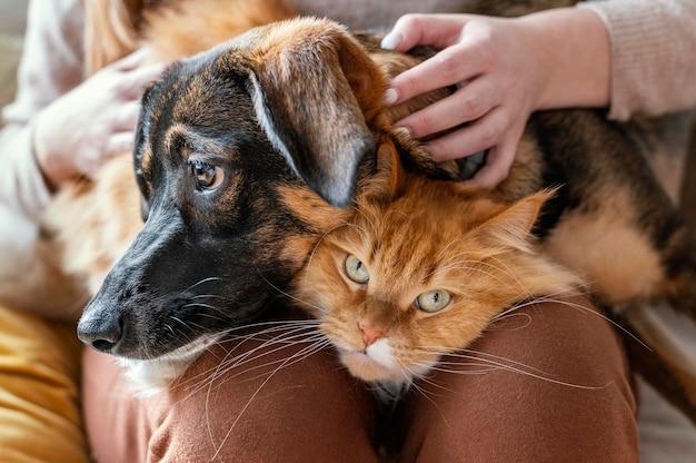 Feche o dono com um gato e um cachorro