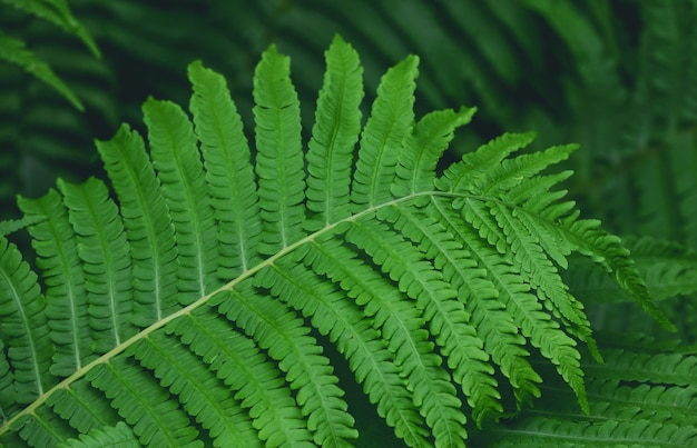 Feche o fundo das folhas verdes frescas da samambaia, vista de alto ângulo