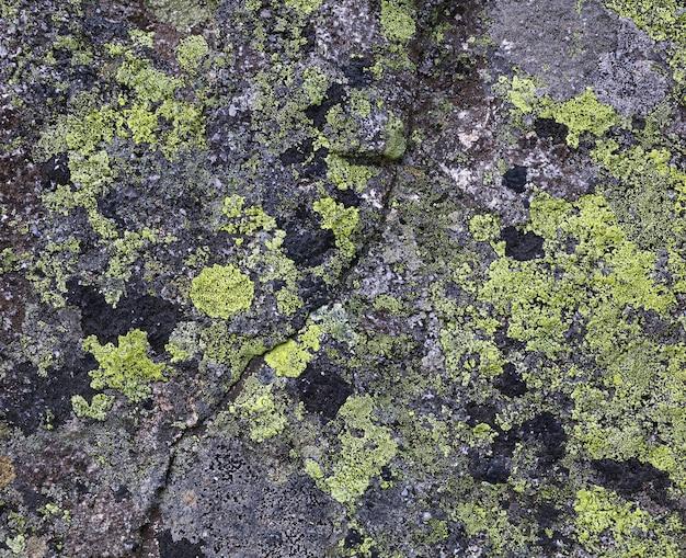Feche o fundo de manchas verdes e pretas de líquen e musgo na superfície de pedra cinza