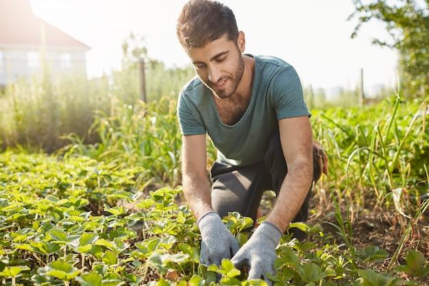 Feche o retrato ao ar livre de um atraente fazendeiro barbudo com uma camiseta azul, sorrindo, trabalhando na fazenda, planeja brotos verdes, colhendo vegetais