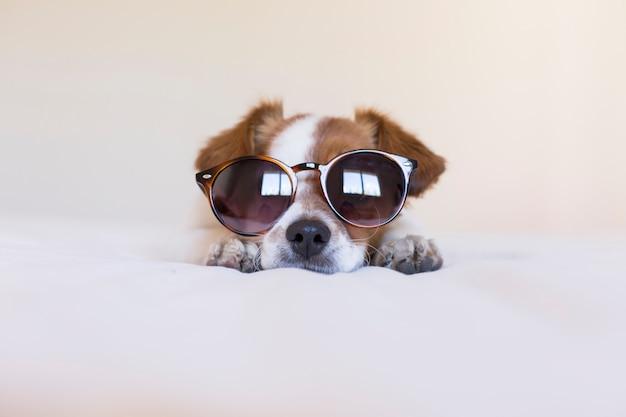 Feche o retrato de um cão pequeno bonito usando óculos escuros modernos e uma gravata borboleta preta. dentro de casa. amor pelo conceito de animais. sentado na cama