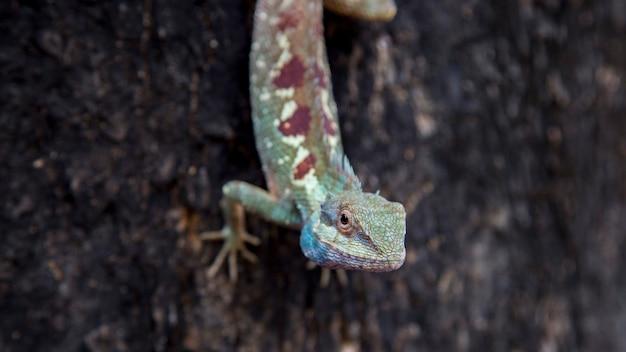 Feche o rosto do lagarto na árvore com o conceito de planeta animal