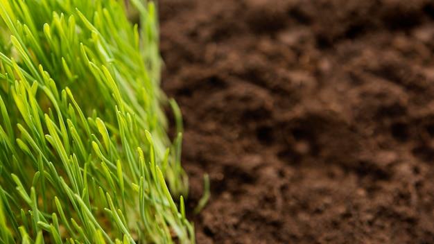Feche o solo natural e a grama