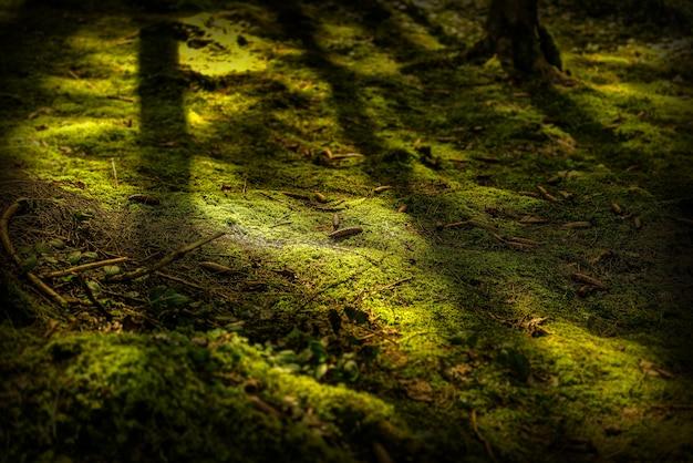 Feche o tiro de um chão musgoso com pinhas durante o dia