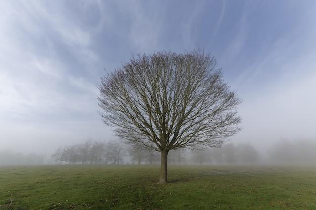 Feche o tiro de uma árvore sem folhas em um campo gramado em um nevoeiro