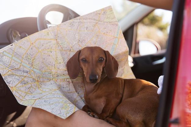Feche o viajante com um cachorro fofo e um mapa