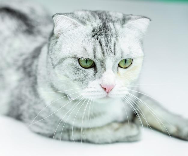 Feche os olhos de gato. conceito de animal de estimação em casa