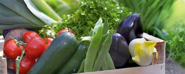 Feche os vegetais frescos e coloridos em uma caixa no jardim