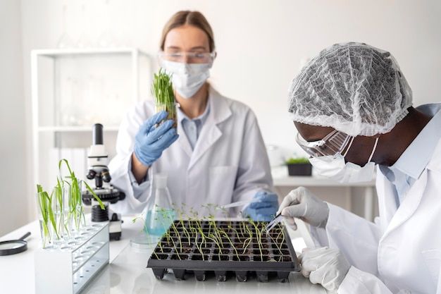 Feche pesquisadores com plantas