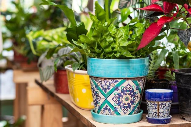 Feche plantando flores em vaso
