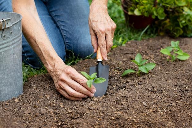 Feche plantando flores no solo