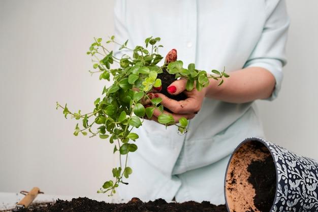 Feche plantando o bulbo da planta no solo