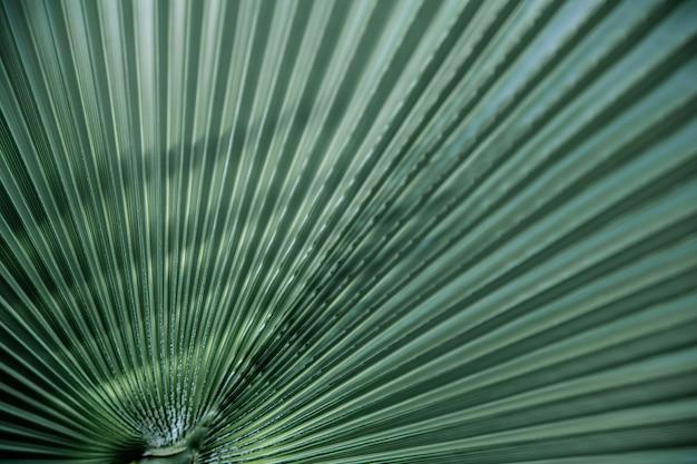 Feche texturas de folhas verdes, linhas retas