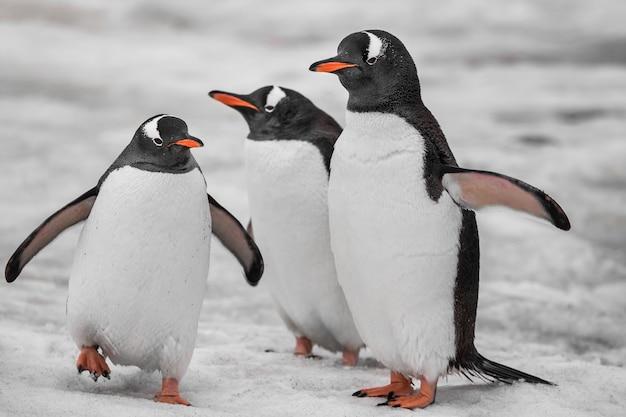 Feche três pinguins. montanhas antárticas.