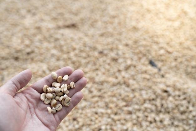 Feijão de café cru na mão com desfocar o fundo