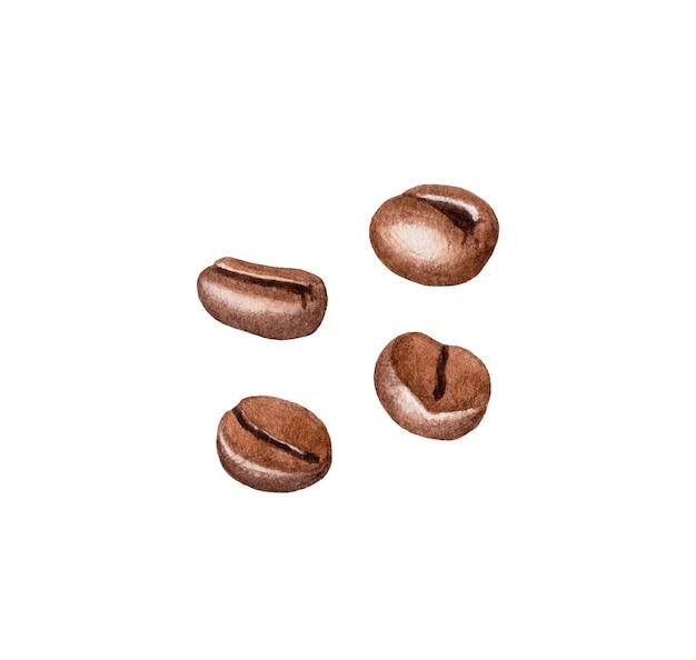 Feijões de café da aguarela isolados