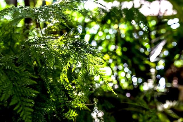 Feitas de beleza saem folhagem verde fundo natural de samambaia floral na luz solar.