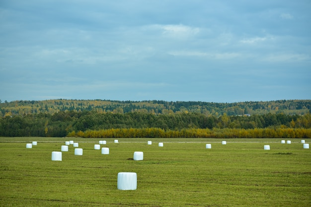 Feixes brancos de feno em um campo agrícola no outono