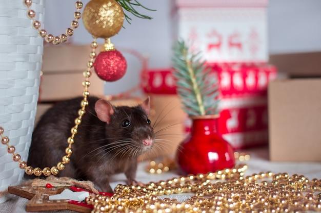 Feliz ano chinês de rato 2020 com rato cinza escuro com decorações de ano novo