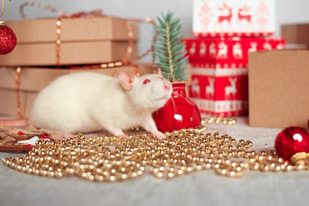 Feliz ano chinês de rato 2020. rato branco com decorações de ano novo