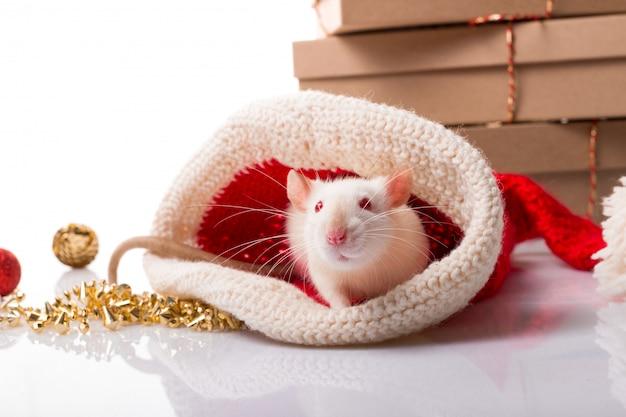 Feliz ano novo chinês do rato 2020. rato branco com decorações de ano novo