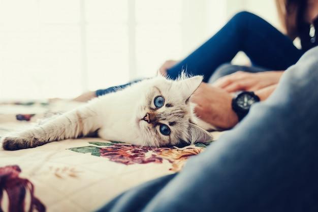 Feliz casal apaixonado com gato