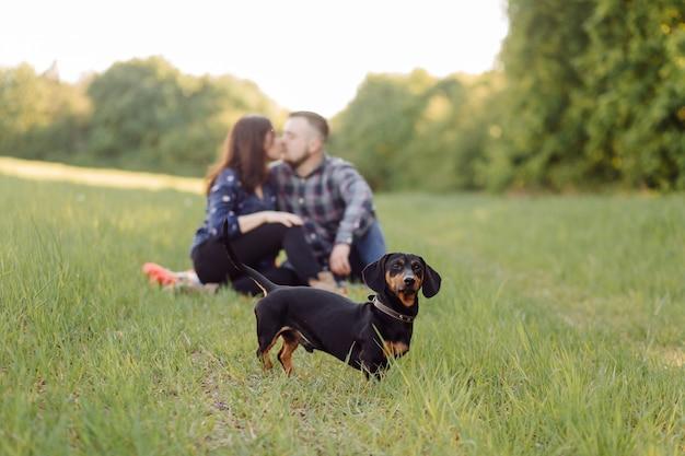 Feliz casal caucasiano jovem sentou-se no gramado do parque com animal de estimação cachorro cão salsicha em um dia ensolarado