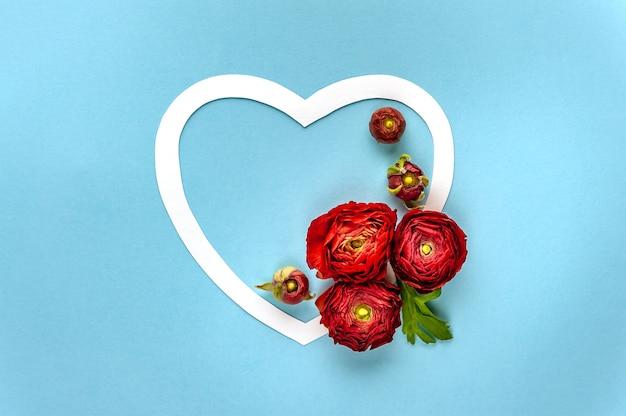 Feliz dia dos namorados. o ranúnculo vermelho decora o coração branco sobre fundo azul. foco suave. vista do topo.