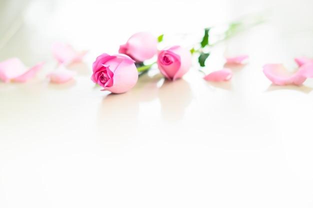 Feliz dia dos namorados, rosa rosa