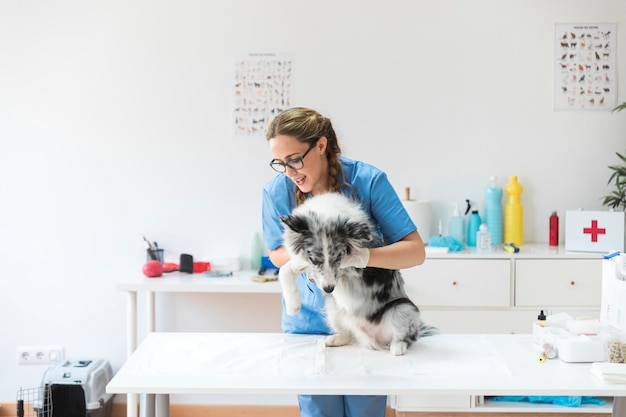 Feliz, femininas, veterinário, examinando, cão, ligado, tabela, em, clínica