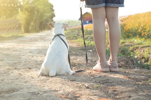 Feliz garota com um cachorro no campo de flores.