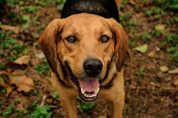 Feliz gengibre marrom e cachorro preto olhando