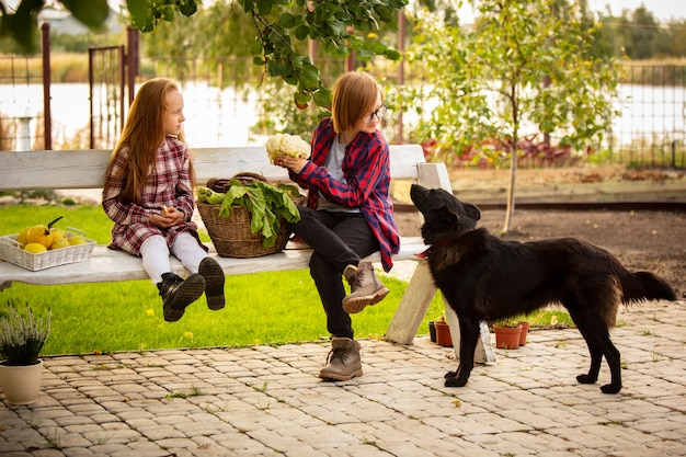 Feliz irmão e irmã com cesta de comida sazonal em um jardim ao ar livre juntos.