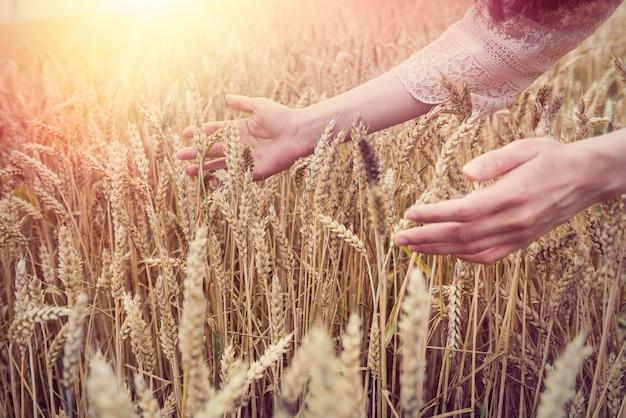 Fêmea cede o campo de trigo, horário de verão. conceito de colheita