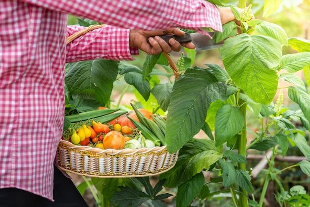 Femininas, colher, legumes, orgânica, em, fazenda, colhido, estação, legumes