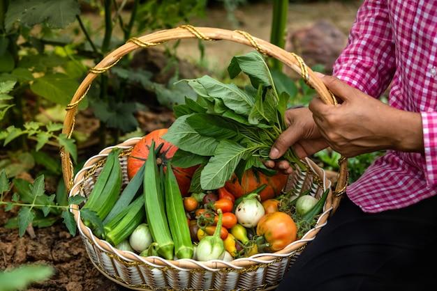 Feminino colheita legumes orgânicos na fazenda