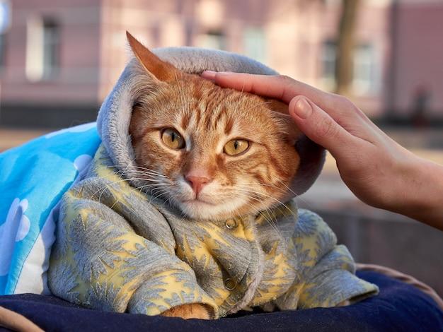 Feminino mão acariciando um gato no cobertor e macacão quente sentado na cariage do bebê