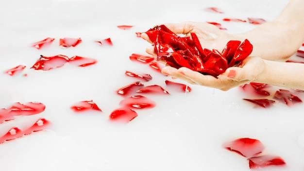 Feminino mão molhada segurando pétalas de flores vermelhas sobre a água branca clara