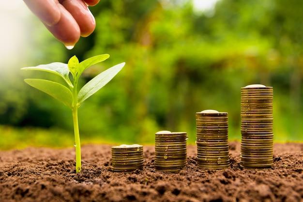 Feminino mão molhando a planta jovem com moeda de pilha para o crescimento do negócio