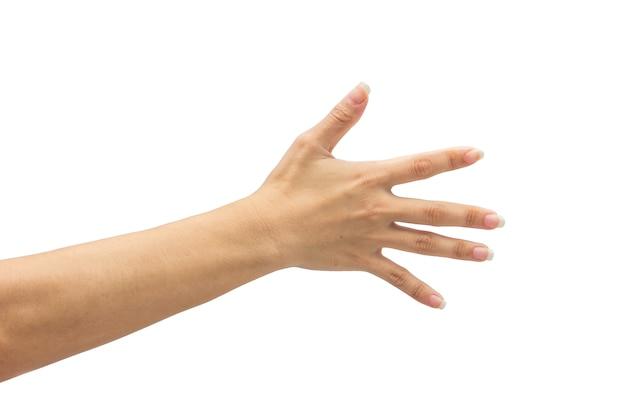 Feminino mão no isolado no fundo branco