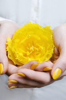 Feminino mão segurando a tulipa amarela.