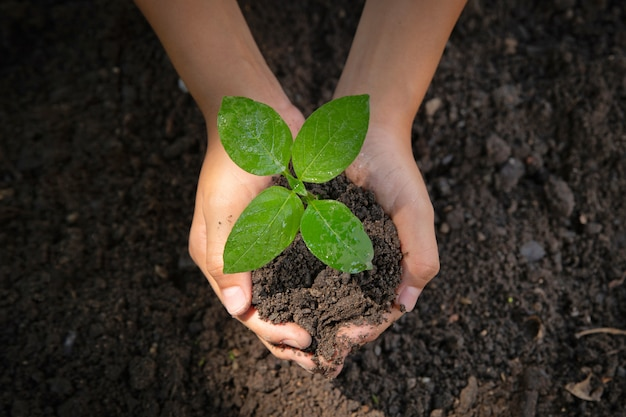Feminino mão segurando tree.environment dia da terra nas mãos de árvores a crescer mudas