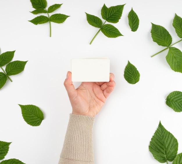 Feminino mão segurando uma pilha de cartões de papel branco vazio e folhas verdes frescas de framboesa, vista superior