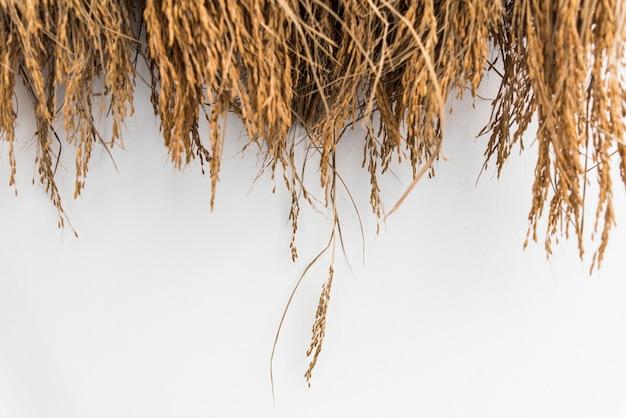 Feno seco ou palha com grãos