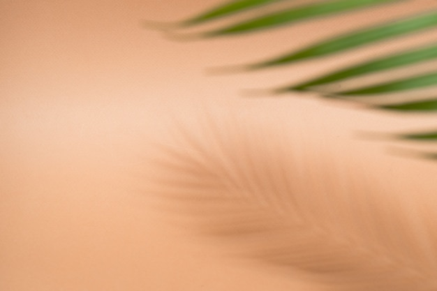 Férias de verão fundo folha de palmeira com sombra