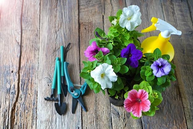 Ferramentas de jardim com flores de petúnia e equipamento de jardim na madeira.