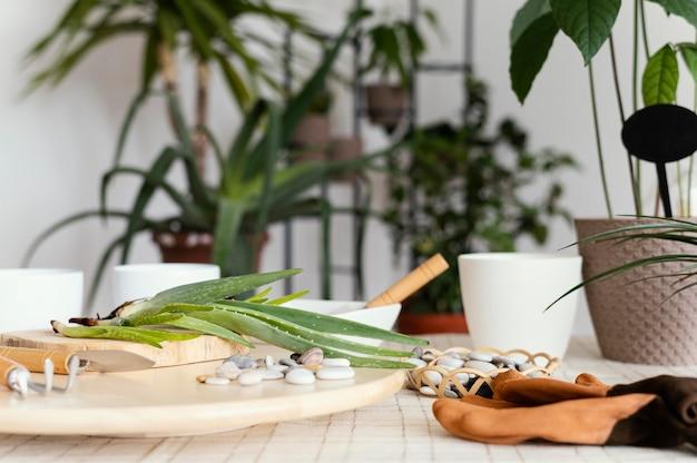 Ferramentas de jardinagem e arranjo de plantas