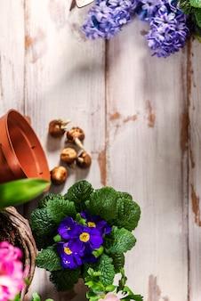 Ferramentas de jardinagem e flores nos potes